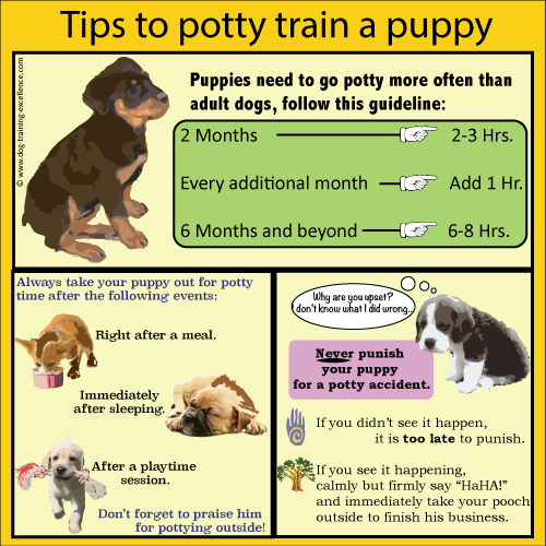 Schedule for Potty Training a Puppy